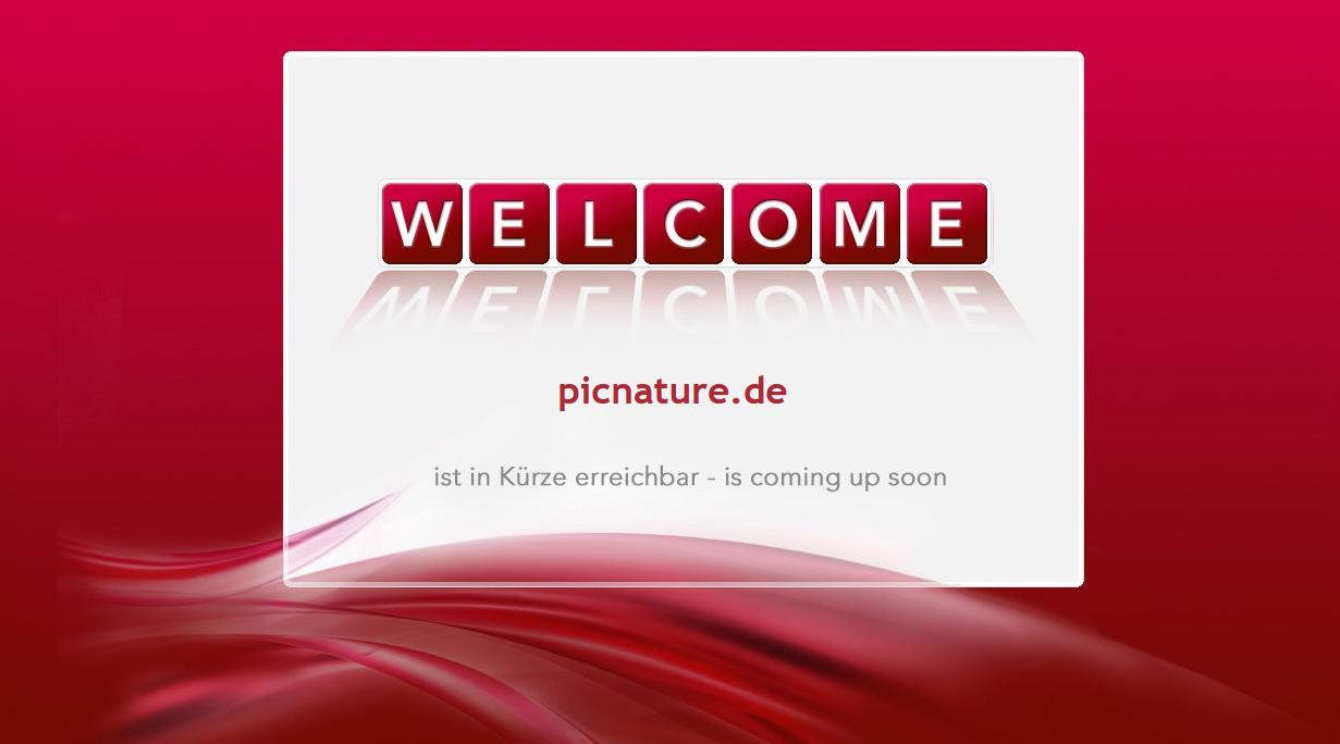 "Hetzner: Webseite ""ist in Kürze erreichbar - is coming up soon"" - Problem"